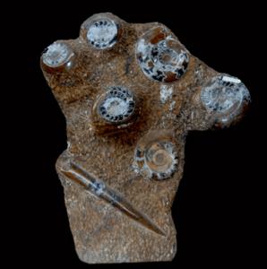 Geode Decor Rare Fossils