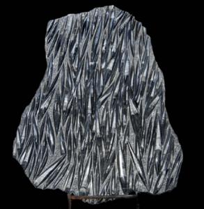 Black Fossil Rare